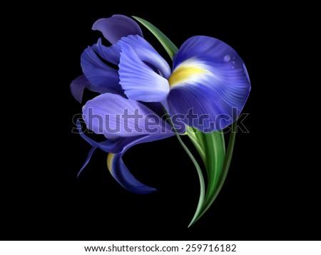 iris flower painted on black - stock photo