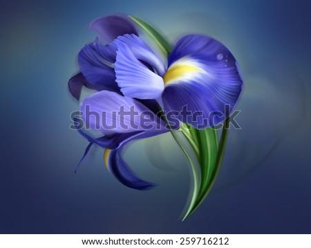 iris flower painted on blue - stock photo
