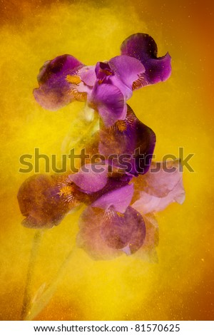 Iris flowers and yellow color powder paint explosion that creates motion and expressive look