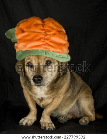 irish dog - stock photo