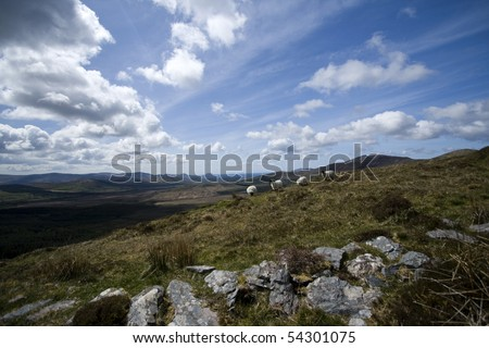 Irish hillside view with sheep along the Kerry Way - stock photo