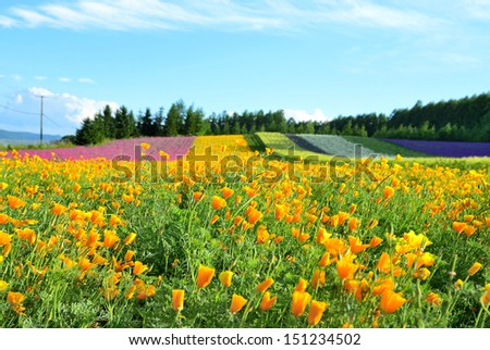 Irodori field, Tomita farm, Furano, Japan. It is the famous and beautiful flower fields in Hokkaido. - stock photo
