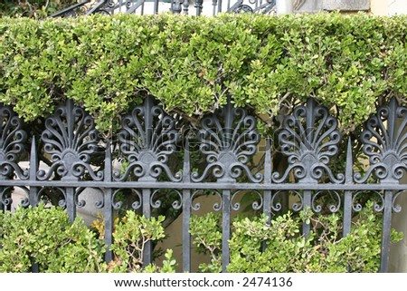 Iron Fence and Hedges