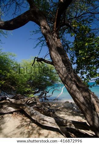 Ironwood at Puako Beach, Big Island, Hawaii - stock photo
