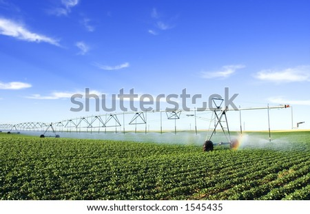 irrigating a potato field - stock photo