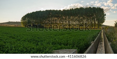 Irrigation Canal Alfalfa crops or trees with grove background at Sunset backlight  - stock photo