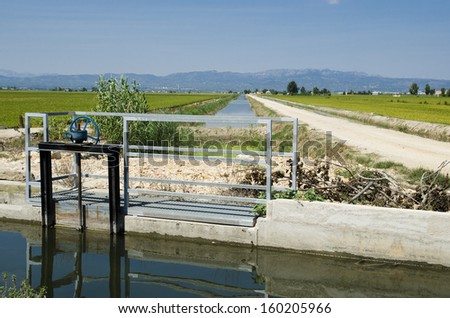Irrigation canal through rice fields at Ebro delta, Spain
