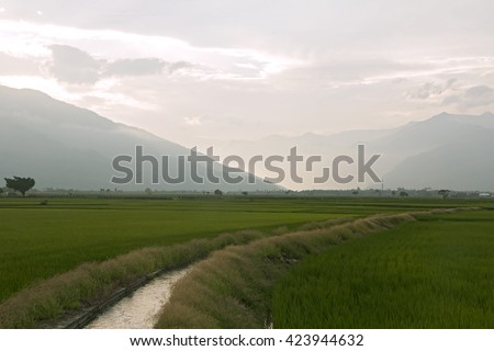 Irrigation ditches pass through paddy  at dusk  with colorful sky (Taitung,Taiwan) - stock photo