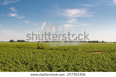 Irrigation of a potato field with an intermittent mobile irrigation system on a warm and sunny day in the summer season. - stock photo