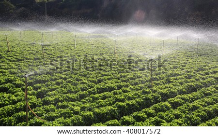 irrigation of vegetables