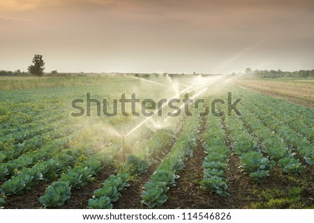 irrigation of vegetables into the sunset - stock photo