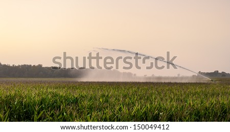 irrigation on corn field  in sunlight