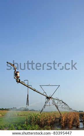 Irrigation sprinkler in the corn field - stock photo