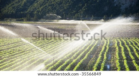 Irrigation sprinklers watering a farm field - stock photo