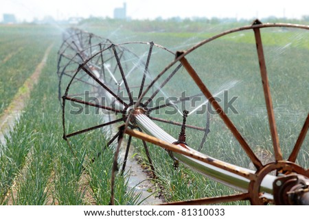 Irrigation system for water supply in onion  field, selective focus - stock photo