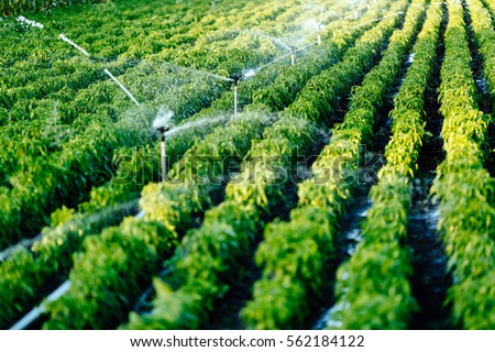 Irrigation system in function watering agricultural plants