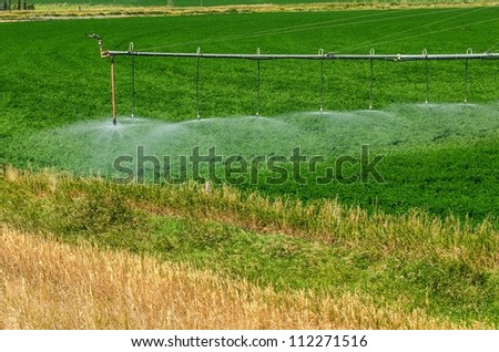 Irrigation system watering a crop in late summer can be used as is or as a background - stock photo