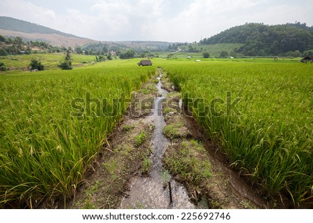 Irrigation water into rice field  - stock photo