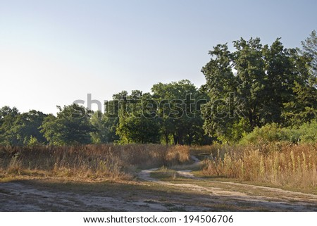 irt road in the morning, dirt road in the oak grove  - stock photo