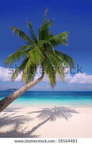 Island Paradise #2 - Palm tree hanging over a sandy white beach with stunning blue waters - stock photo