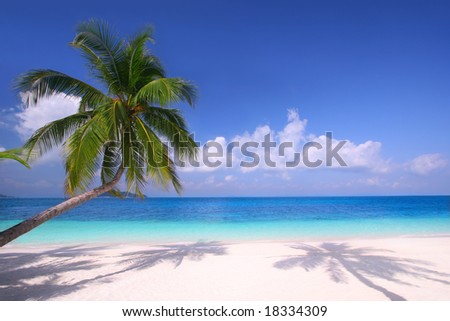 Island Paradise - Palm trees hanging over a sandy white beach with stunning blue waters - stock photo