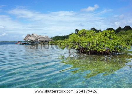 Islet of mangrove tree in the water with a tropical restaurant over the sea in background, Caribbean sea, Panama, Bocas del Toro - stock photo