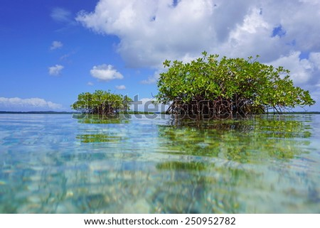 Islets of mangrove trees viewed from sea surface, Caribbean,Central America - stock photo