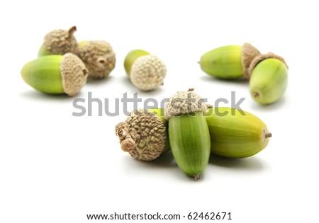 Isolated acorn. Element of design. - stock photo