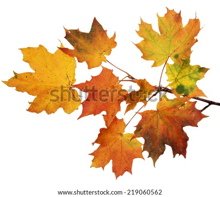 Isolated autumn leaves on white background - stock photo