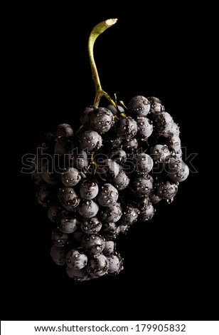isolated black grapes on the black background - stock photo