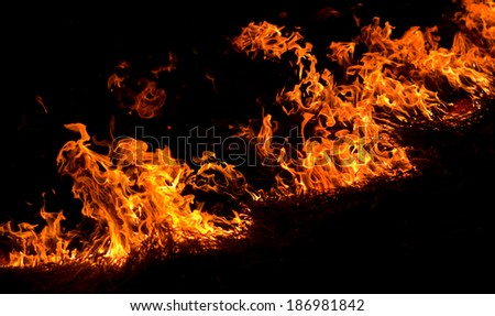 Isolated blaze fire on black background. Burning dry grass on the field. - stock photo
