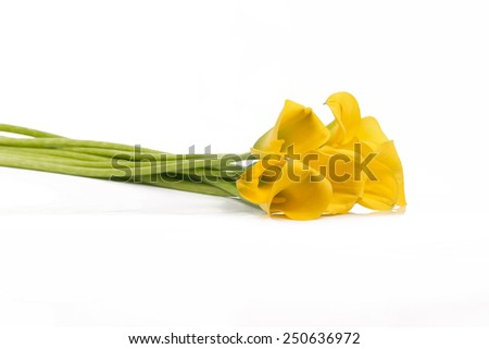 Isolated bouquet of yellow Calla lilies on a white background - stock photo
