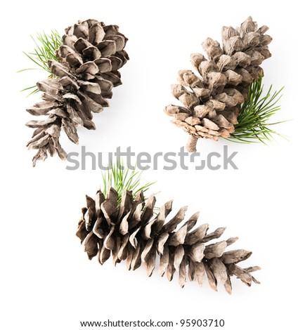 Isolated cedar cone with small branch, few views in one composition