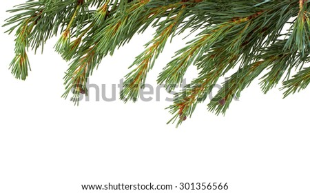 Isolated Christmas Tree branch isolated on a white background.