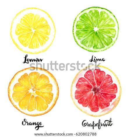Isolated Citrus Slice Fruits Watercolor Hand Ilustración de ...