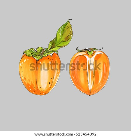Isolated color sketch markers persimmon on grey background