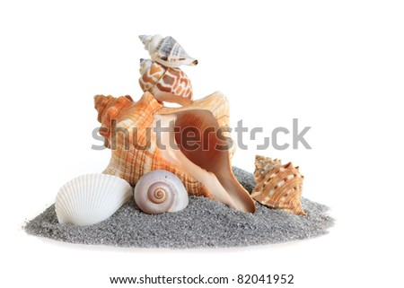 Isolated conch sea shell stack on sand. - stock photo