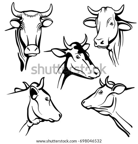 cow profile stock images  royalty free images  u0026 vectors