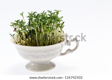 isolated cress in small cup on white background - closeup - stock photo