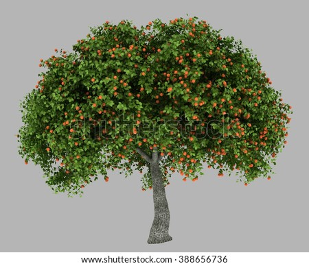 isolated 3d rendered apricot tree full of apricots with alpha channel