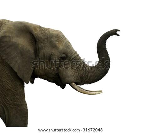Isolated elephant - stock photo