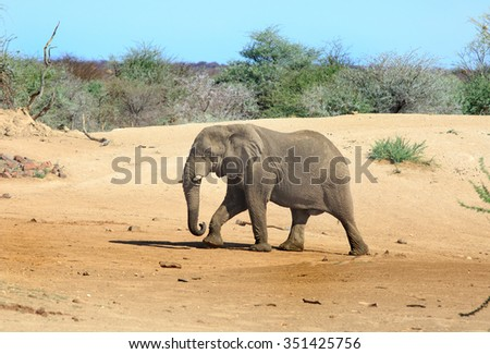 Isolated Elephant walking across the dusty plains in Erindi Private Reserve in Namibia