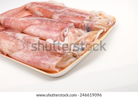 Isolated fresh squid or cuttlefish on white background - stock photo
