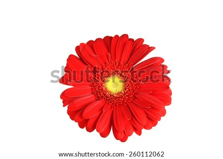 Isolated Gerbera Daisy on white background isolated