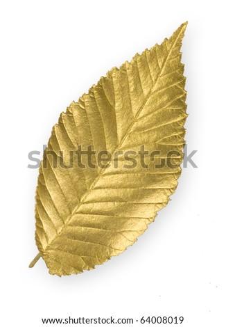 Isolated gold elm leaf - stock photo