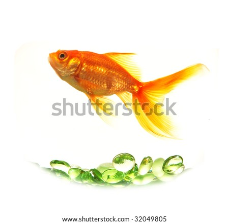 isolated gold fish over green glasses without bowl - stock photo