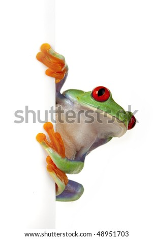 Isolated green frog peeping around placard