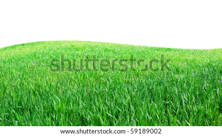 Isolated green grass. Element of design. - stock photo