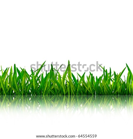 Isolated green grass with reflection on white background - stock photo