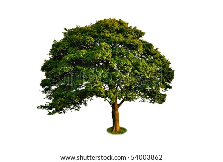 Isolated green large tree - stock photo
